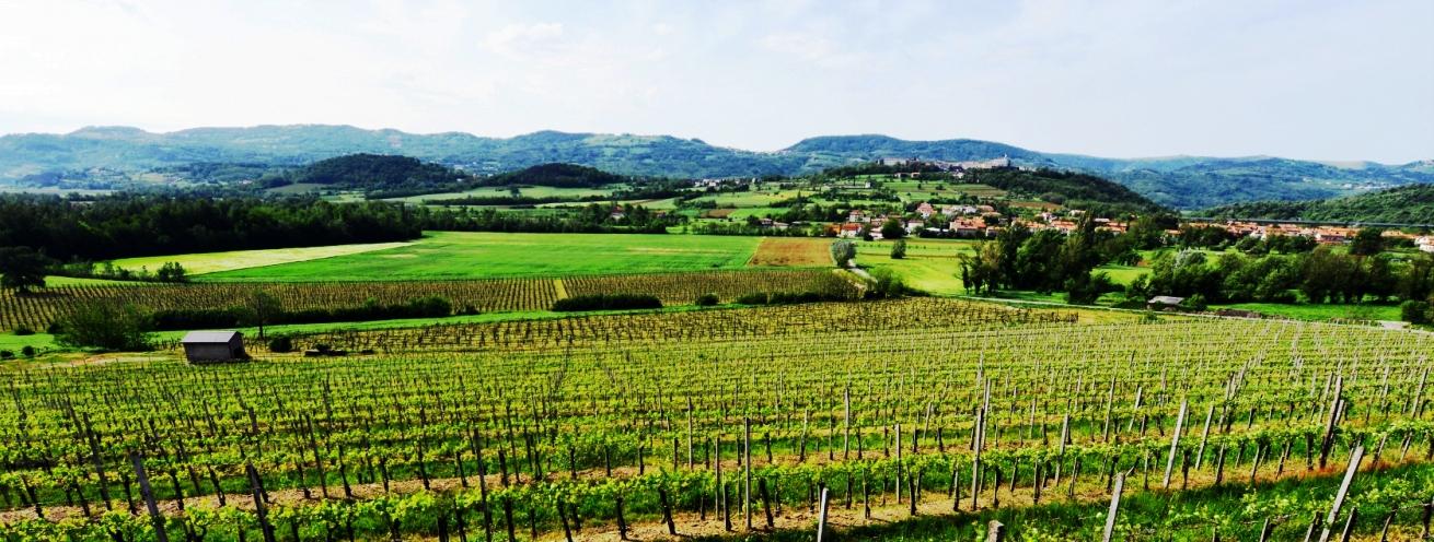 Risultati immagini per vineyards slovenia